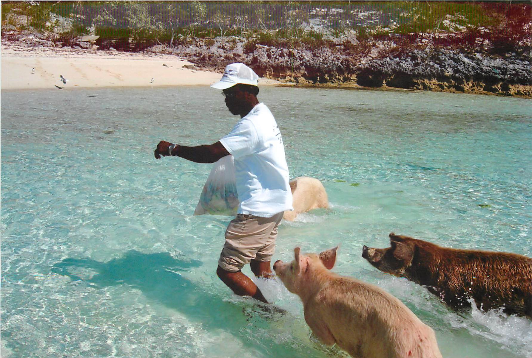 Captain Joel with the Exuma Swimming Pigs