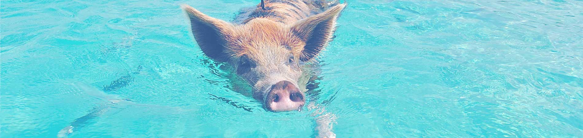 Swimming with the pigs in Staniel Cay
