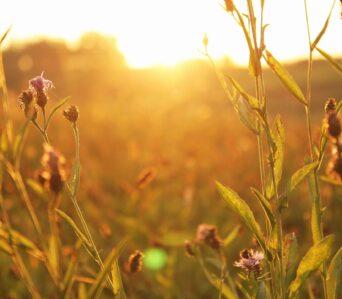 The Key to Spiritual Growth and Fruitfulness