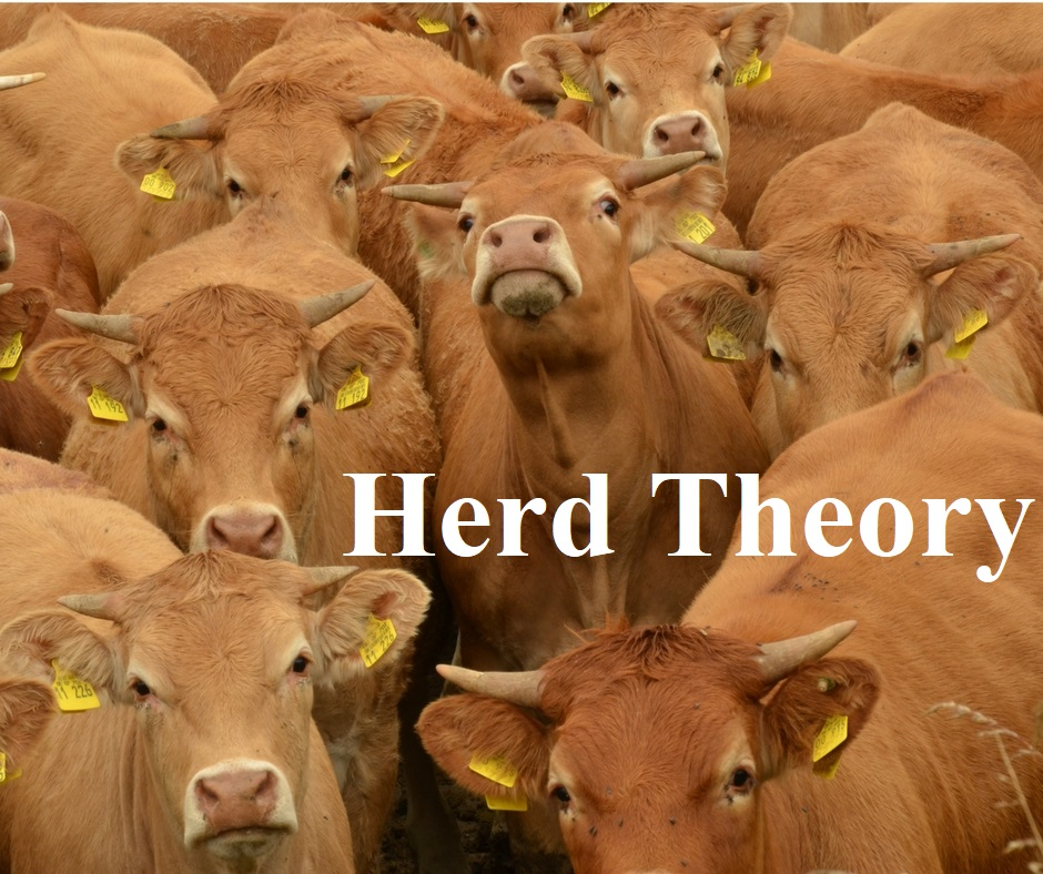 TRAINING TUESDAY PODCAST 129 (Finally Met the Man; Expertise and Tactical Knowledge; Herd Theory)