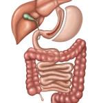 Laparoscopic Gastric Sleeve