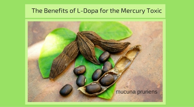 THE REMARKABLE BENEFITS OF L-DOPA FOR THE MERCURY TOXIC