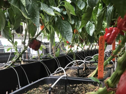 Indoor cultivation facility design - Integratedbio