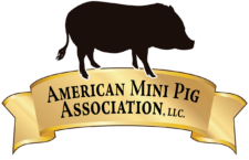 Mini Pig Events