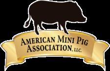 Mini Pig Events