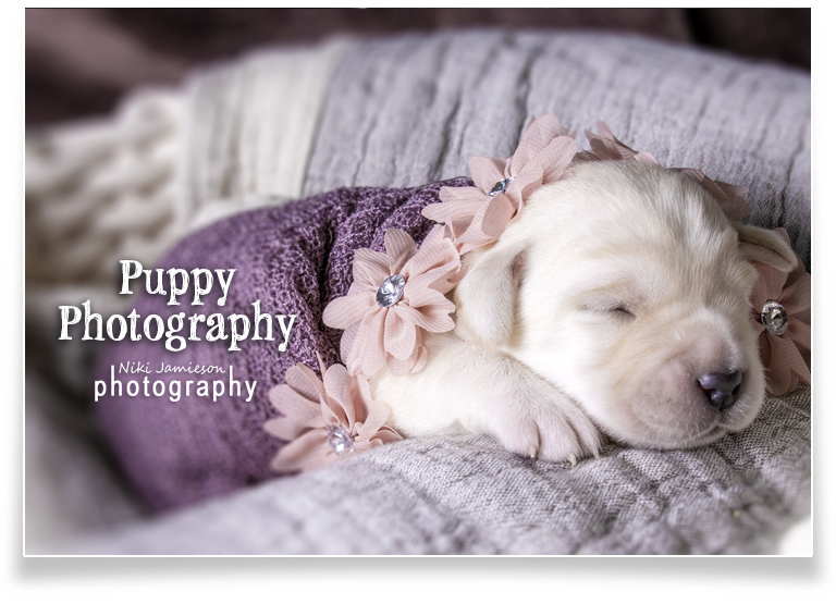 homepage_puppy_Photography