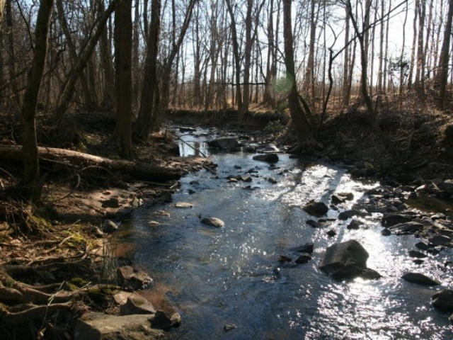 photo of Basin Creek in the winter with sunshine coming down through the trees and onto the water, rocks in the water