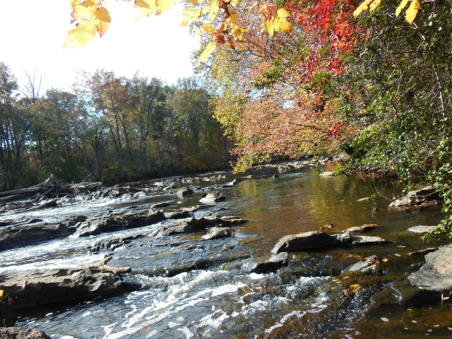 a photo of the river with rocks and log snags in it and trees bright with fall color in the foreground