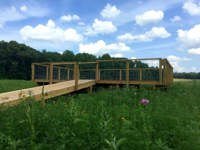 photo of the wooden observation deck platform and ramp to the platform situated in a wildflower meadow with blue sky and clouds and a treeline in the background