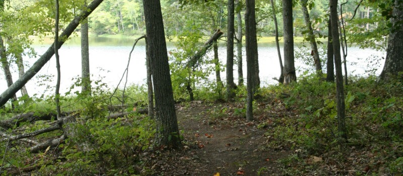 photo of the Haw River Trail in the woods at Stoney Creek Marina with a background view of the water