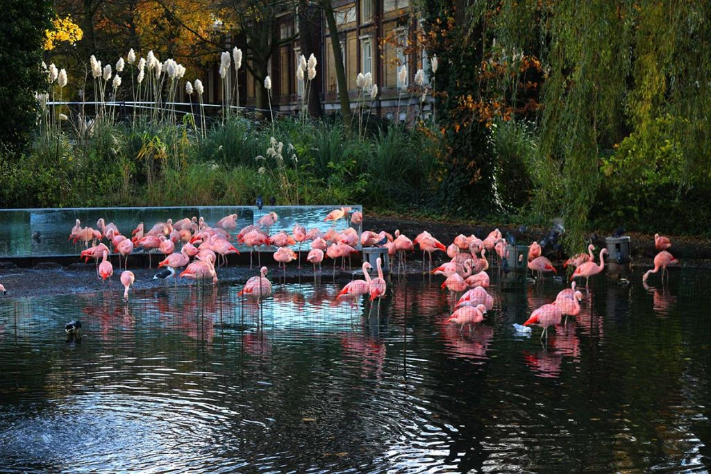 Artis: The Royal Amsterdam Zoo | Discovering the secrets of Amsterdam