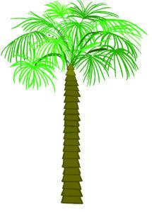 A palmyra tree. Art by Anjali Noel Ramesh.