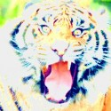 tiger a spectral mirage color 230