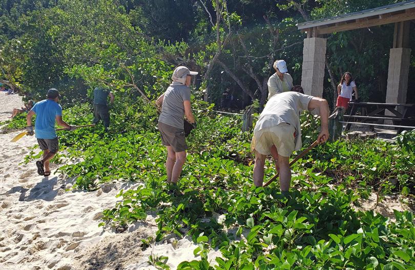 Beach stabilization planting