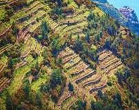 Cinque Terre terraces and vineyards