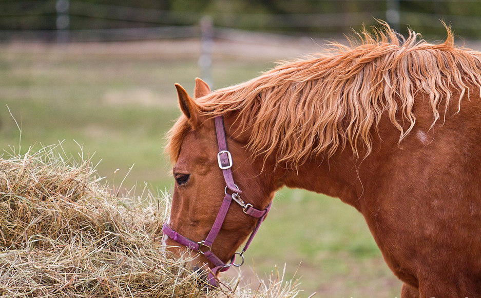Help for Hungry Horses