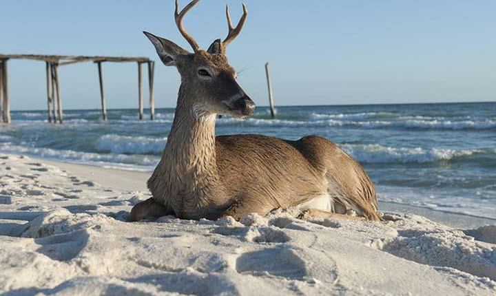 Everyone & Everything loves the Beaches of NW Florida!