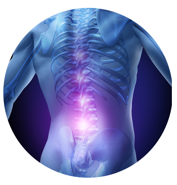 Anatomical image of the human back and spine