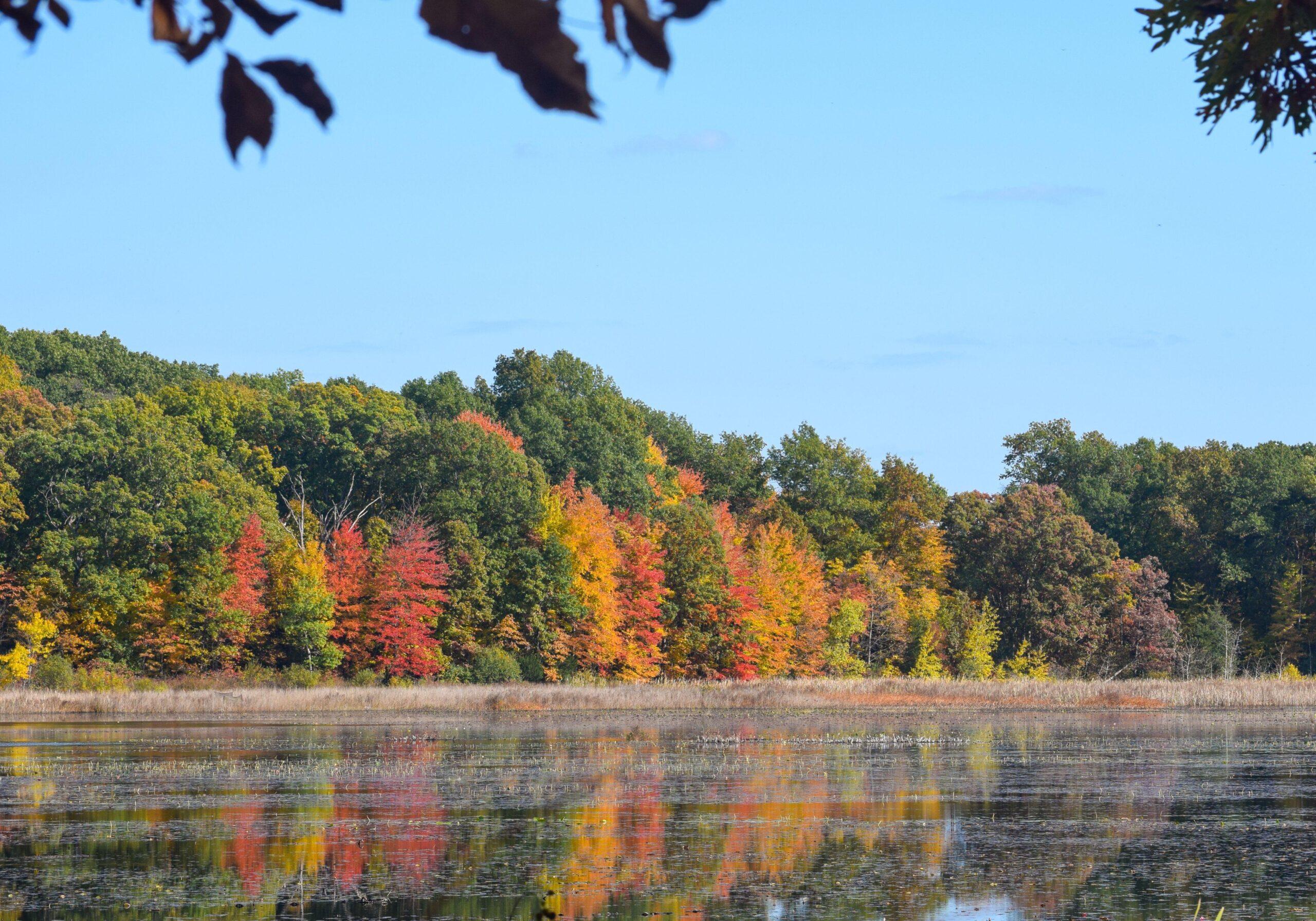 Ann Arbor - As Tree Town