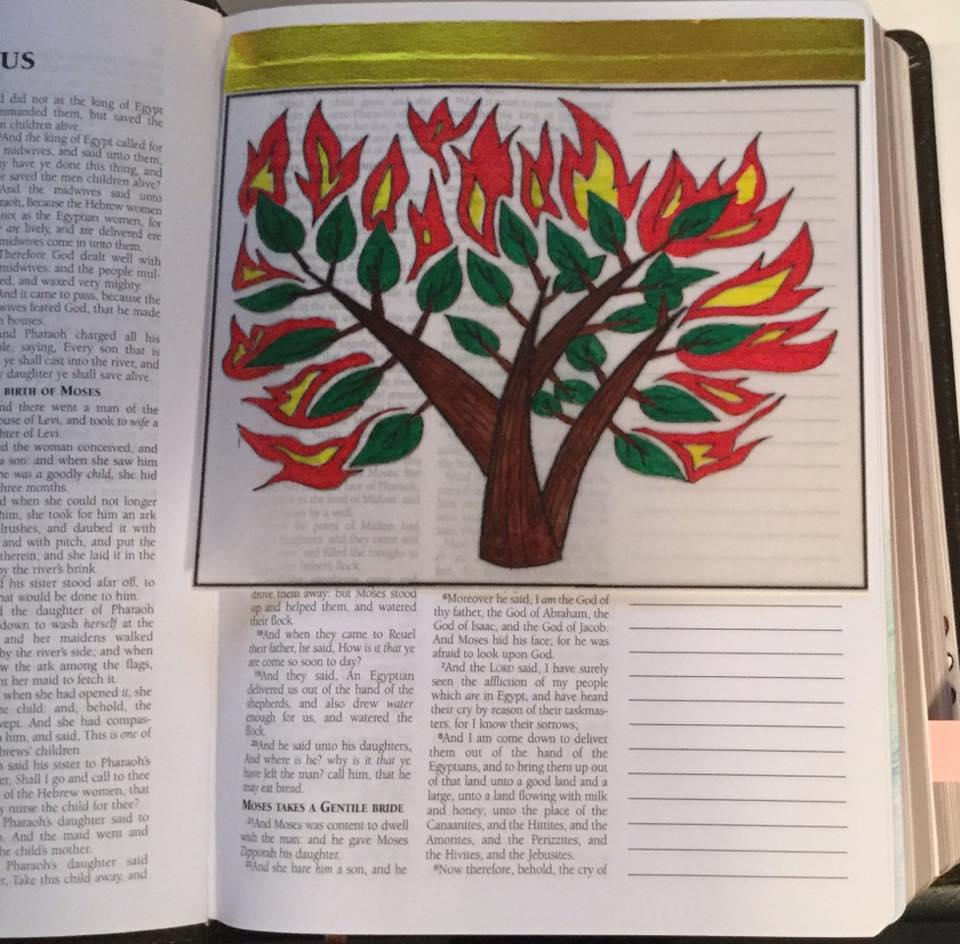 Elm Ex Burning Bush Vellum - Marla Woods Fuller