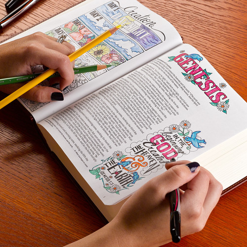 Bibles – Illustrated Bibles