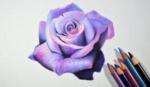 pencil-purple-rose