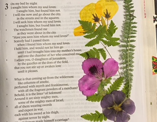 CBJ Project #3B, Pressed Flowers and Modge Podge in My Bible?