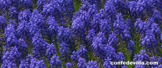 fases bonitas de primavera