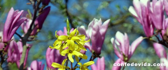 Foto para Poema de una Tarde de Primavera