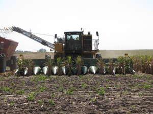 corn picker