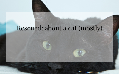 Rescued (about a cat, mostly)
