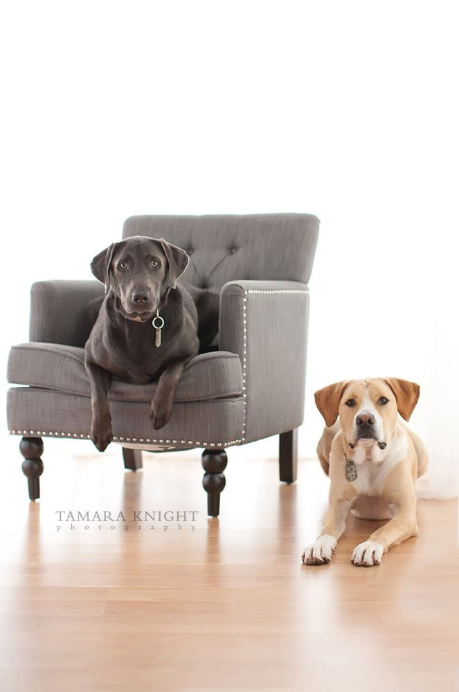 Dogs in the chair by Tamara Knight Personal Branding Photographer