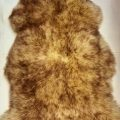 jumbo sheepskin sunglow