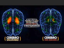 El efecto de la droga sobre el cerebro es extenso