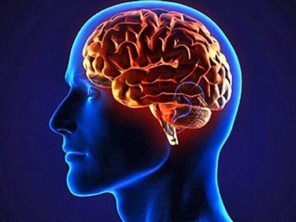 magnetita en el cerebro