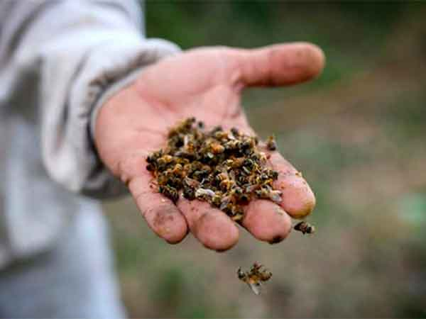 uso de agroquimicos mata las abejas