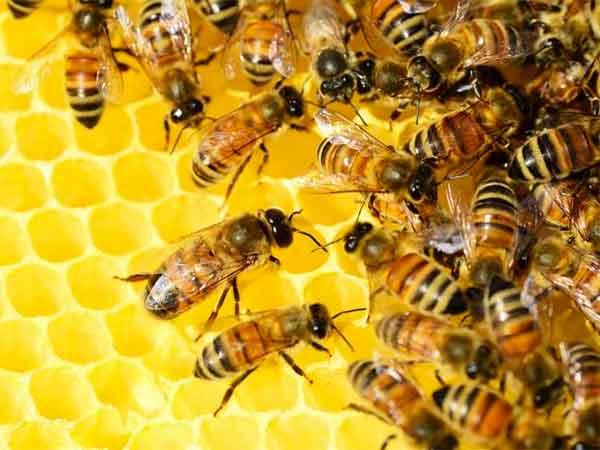 abejas saben matematicas