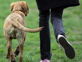 La razón por que tu perro te adora