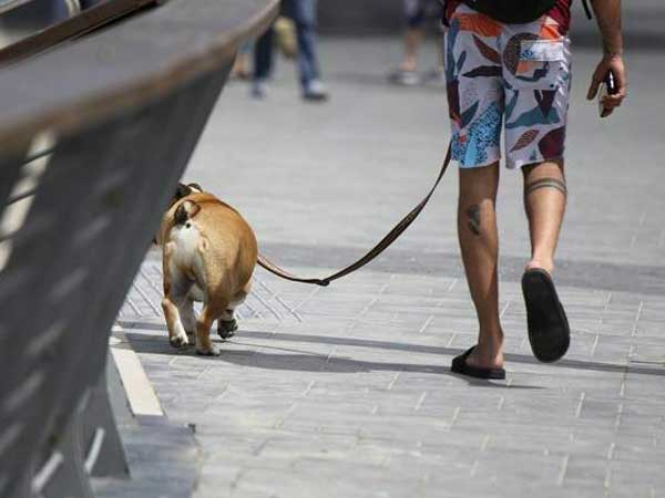 ¿Por qué los perros son tan especiales? La ciencia afirma que es porque te quieren