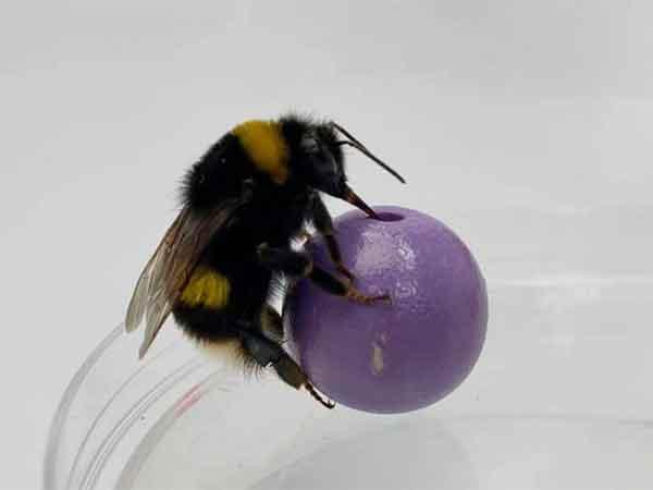 inteligencia de las abejas