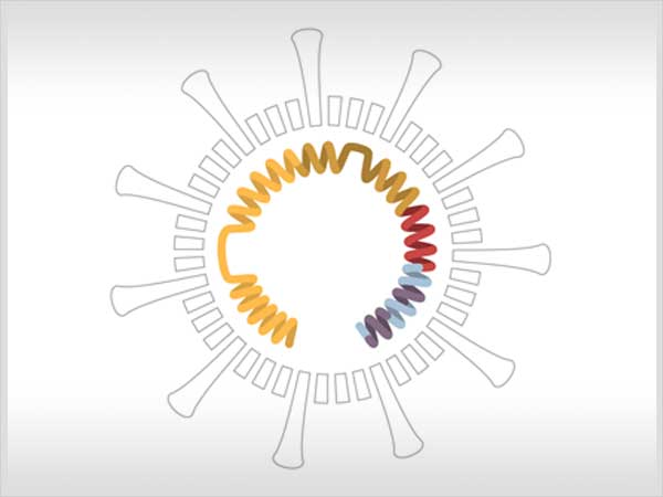 Así muta y se propaga el coronavirus