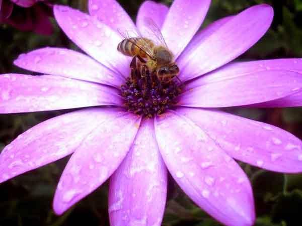 abejas insectos sociales