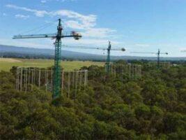 El aumento de CO2 provoca desajustes de los ciclos de nutrientes del suelo