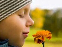 Lo olfatorio y lo social: una relación un tanto enigmática