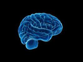 Hallazgo histórico: captan en vídeo cómo el cerebro elimina las neuronas muertas
