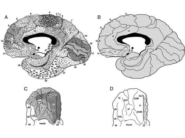 neurobiologia de la agresion y violencia