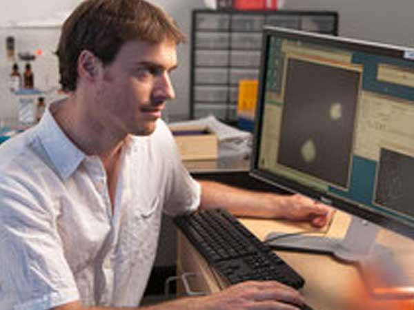 Descubren el mecanismo molecular que propicia los comportamientos colectivos
