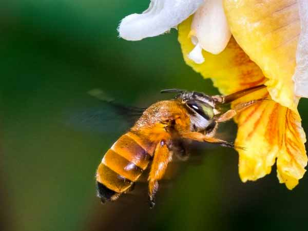 Qué muestra el primer mapa global de abejas