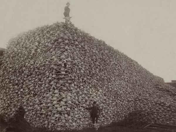 La sexta gran extinción está en marcha