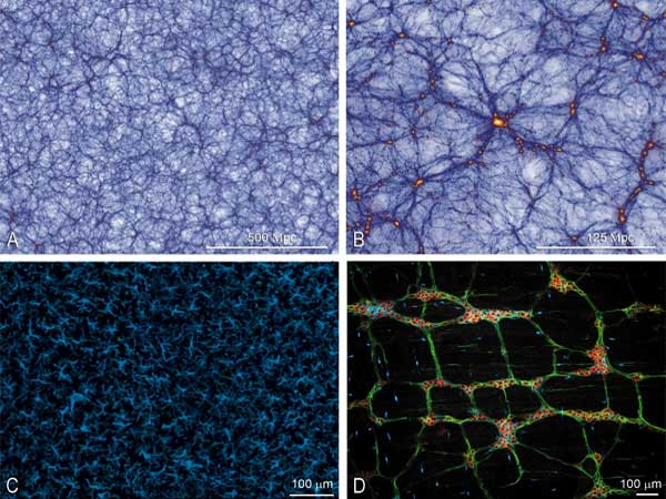 El cerebro funciona igual que el universo